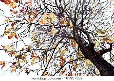 Tree with autumn leaves waiting to fall down