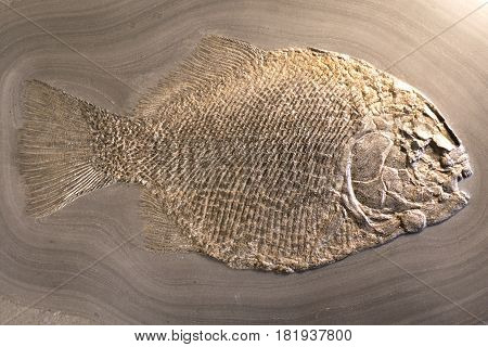Fish fossil on sand stone background - detail