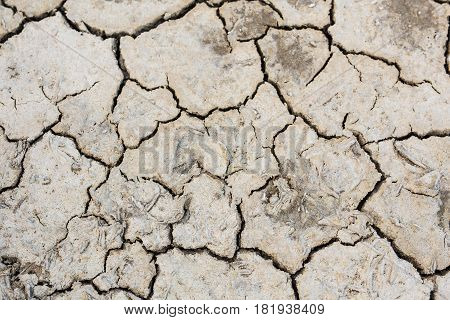 Dry land texture, background image. The texture of cracked earth