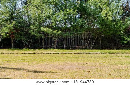 Brightly lit field with evergreen trees on far edge of field on a bright sunny day.
