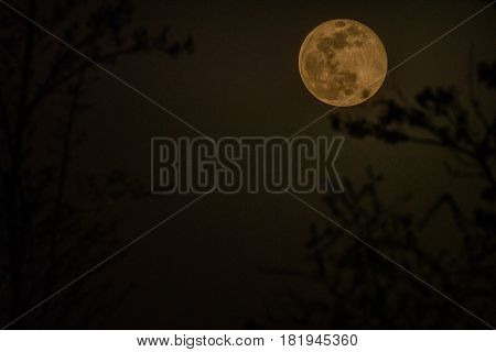 First night of waxing gibbous moon after the April full moon behind a blurred out tree in the foreground as seen from a small town in South Korea