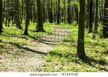 Retro Green Forest.