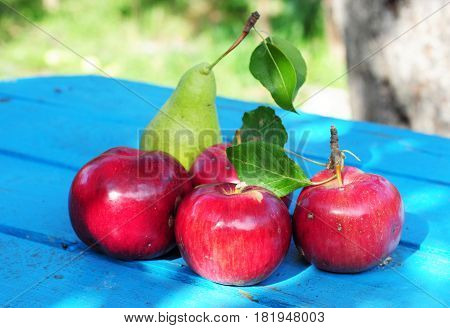 Autumn Red Apples Garden Harvest. Red Apples  on blue wooden table.