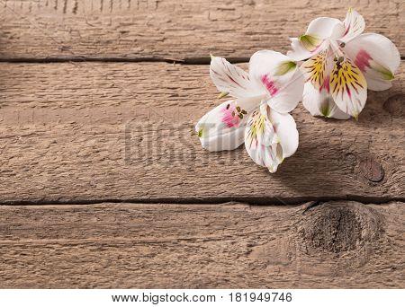 the alstromeria on old dark wooden background