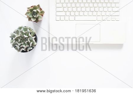 Flat lay of white laptop computer with pots succulent plant on white background with copy space
