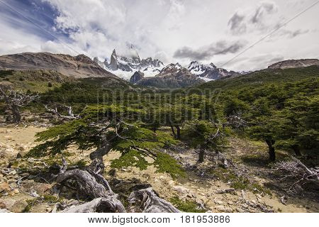 trail in forest near fitz-roy mountain in patagonia with clouds on blue sky