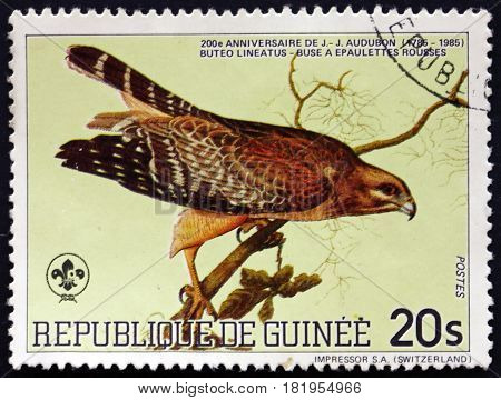 GUINEA - CIRCA 1985: a stamp printed in Guinea shows Red-shouldered Hawk Buteo Lineatus is a Medium-sized Hawk Bird circa 1985