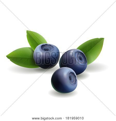 Blueberry, leaves and forest berries isolated d. Realistic icon. Vector illustration.