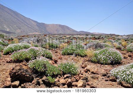 View of volcano Teide. Tenerife island, Spain