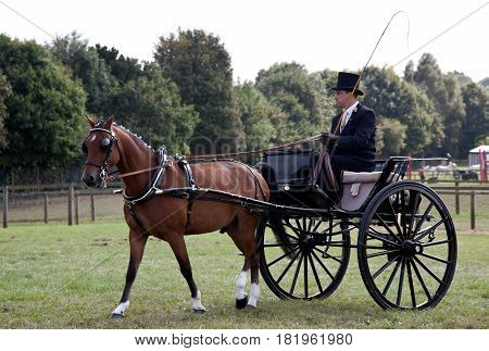 NEWBURY, UK - SEPTEMBER 21: Driver and horse competing in the gig driving class approach the main arena stand for the public to view at the Berks County show on September 21, 2014 in Newbury