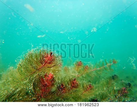 Freshwater Underwater Scene Freshwater Rivers And Lakes