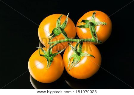 Yellow tomatoes on a branch isolated on a black background