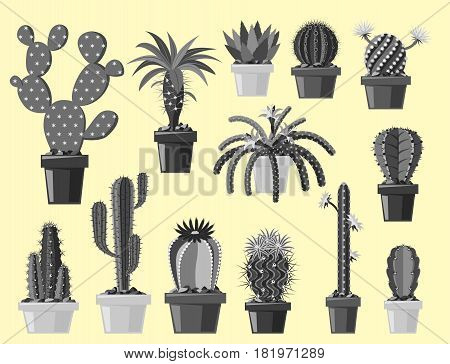 Cactus flat style nature desert flower monochrome cartoon drawing graphic mexican succulent and tropical plant garden art cacti floral vector illustration. Style prickly botanical houseplant in pot.