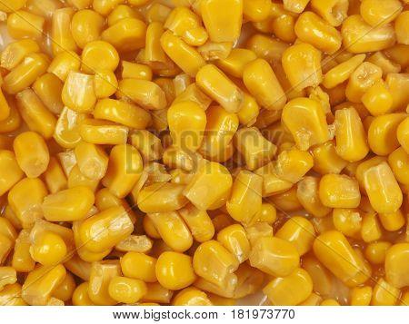 Maize Corn Food