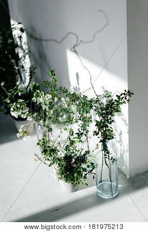 Herbs in glass bottles near the wall. The shadow from the window on the wall. White wall and white floor.