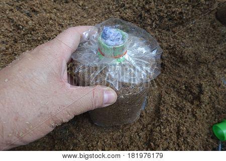 Preparing Food For Infected Mushroom Bag .