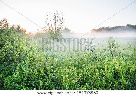 Mist on a bog at dawn. Spring landscape