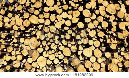 Log pile in rural France, end view