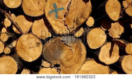 Log pile featuring the letter X in forest in rural France