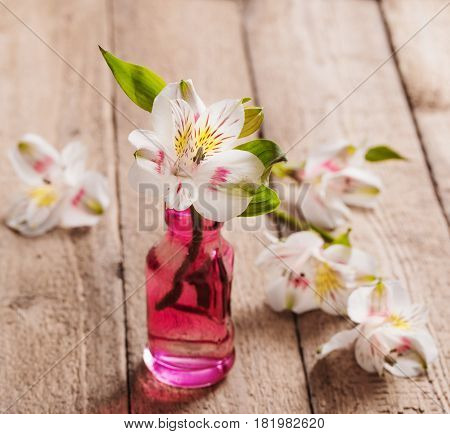 the beautiful white lstromeria on wooden background
