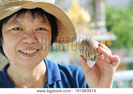 Bamboo mushroom cultivation :Farmer woman picking up mushrooms for showing sizes and colors mushrooms.
