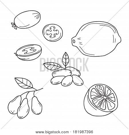Hand drawn sketch fruits - feijoa, lime. dogwood berries. Eco food. Vector set.