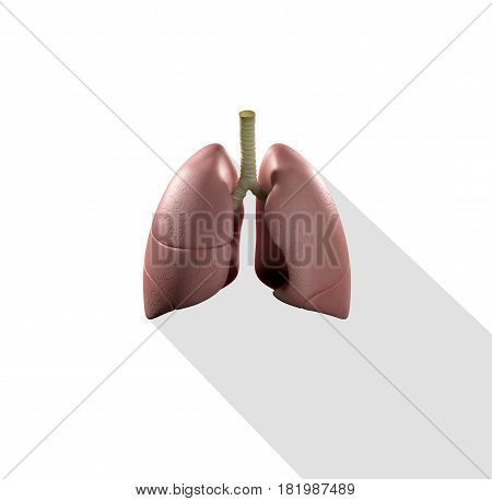 Lungs infographic. Anatomical icon of lungs on white background.3d Illustration.