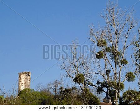 Tower ruin with poplar trees and mistletoe in central France