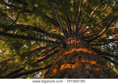 tree seen from below nature brown green backgroun