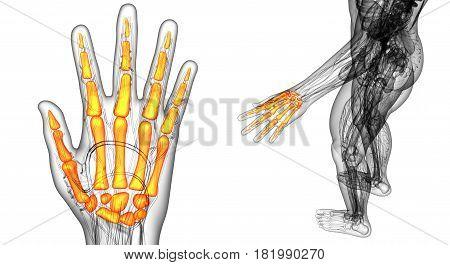 3D Rendering Illustration Of The Skeleton Hand