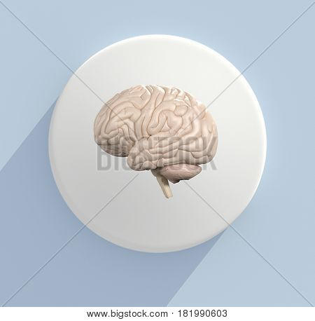 Brain infographic. Anatomical icon of brain on white circle. 3d illustration.