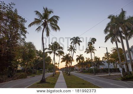Coconut nut palm trees in a street in the city of Naples. Florida United States