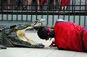 Crocodile show at Phuket zoo park, Thailand poster