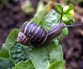 Snail crawling. Snail coming out of its shell/freedom. It feels safe/peace. Insect. Nature poster