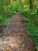 Rocky gravel path along the trail in a forest on the Moakong hills poster