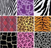 Vector illustration of animal and snake skin poster