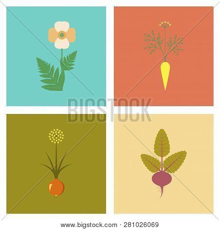 Assembly Flat Illustrations Flower Papaver Daucus Carota Allium Beta