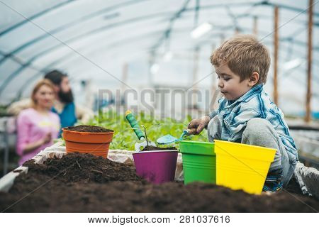 Natural Soil. Rich Natural Soil For Gardening. Small Boy Farmer Work In Greenhouse With Natural Soil