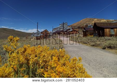 In The Foreground Are Flowers, In The Background A Blurred Ghost Town, Bodie, California.