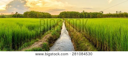 Rice Field With Sunrise Or Sunset In Moning Light Nature Countryside