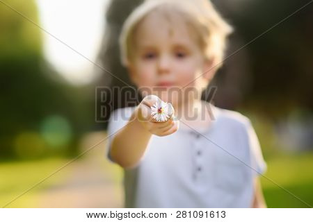 Little Boy Shows A Flower And Asks What It Is. Study Of Nature. Young Naturalist. Summer Activities