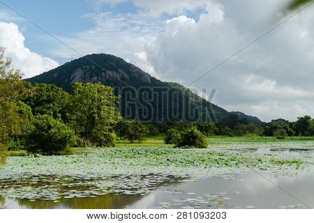 Castlereigh Reservoir Plantations In Sri Lanka Mountains
