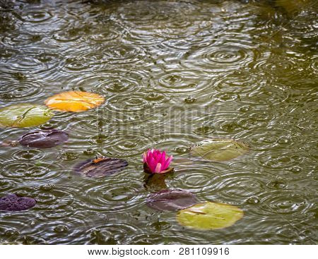 raindrops in the garden pond