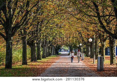 People On Autumn Road With Many Trees