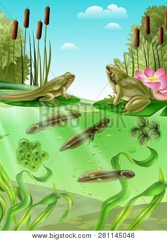 Frog Life Cycle Water Stages Realistic Poster With Adult Amphibian Eggs Mass Tadpole With Legs Vecto