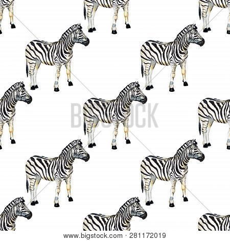 Seamless Pattern With Watercolor Image Of Zebra. Good Design For Wrapping Paper, Textile, Scrap Book