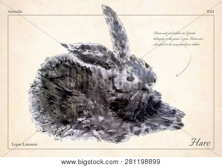 Hare, Rabbit Isolated Vector. Hare, Rabbit Isolated Vector Illustration For Book, Card, Articles. Oi