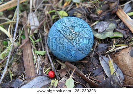 A Bal In Nature Next To A Red Berrry