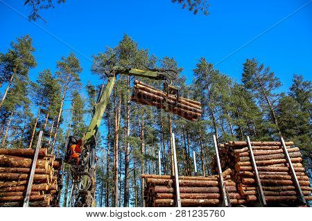 Crane In Forest Loading Logs In The Truck. Crane Operator Loading Logs On To Truck On A Nice Spring