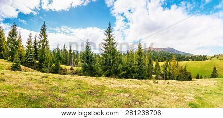 Panorama Of Beautiful Countryside In Mountains. Spruce Trees On The Meadow. Top Of The Snow Covered